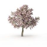 在白色的开花的树 免版税库存照片