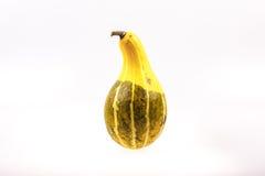 在白色的异常的金瓜 免版税库存照片
