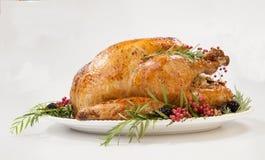 在白色的感恩火鸡 免版税库存照片