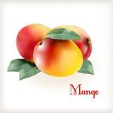 在白色的成熟芒果 库存图片
