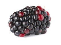 在白色的成熟黑莓 免版税库存照片