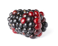 在白色的成熟黑莓 图库摄影