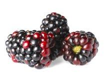 在白色的成熟黑莓 免版税库存图片