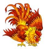 在白色的战斗的橙红雄鸡 免版税图库摄影