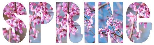 在白色的春天文本 免版税库存照片