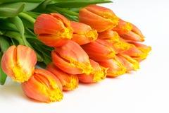 在白色的束橙色郁金香 库存图片