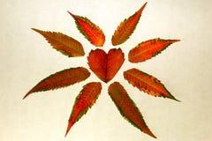 在白色的查出的红色心形的叶子 库存图片