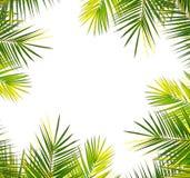 在白色的棕榈框架 免版税库存照片