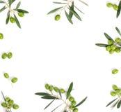 在白色的橄榄色的边界 顶视图 库存照片