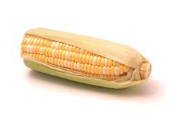 在白色的玉米 免版税库存照片