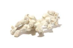 在白色的白色海洋珊瑚 免版税库存照片