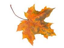 在白色的秋天叶子 库存照片