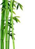 在白色的竹子 向量例证