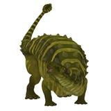 在白色的篮尾龙恐龙 库存照片