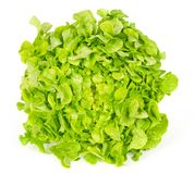 在白色的绿色橡木散叶莴苣正面图 免版税库存图片