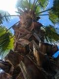 在白色的绿色美丽的棕榈树 免版税库存照片