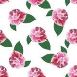 在白色的罗斯camelia手拉的样式 库存图片