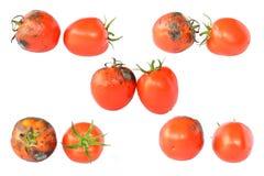 在白色的腐烂的蕃茄 库存图片