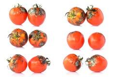 在白色的腐烂的蕃茄 图库摄影