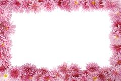 在白色的花卉框架 库存照片