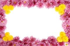 在白色的花卉框架 免版税库存图片
