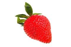 在白色的草莓 库存照片