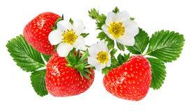 在白色的草莓 免版税库存照片