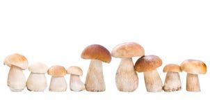 在白色的蘑菇 免版税图库摄影
