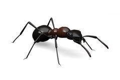 在白色的蚂蚁 库存图片