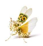 在白色的螳螂 免版税库存图片