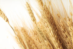 在白色的谷粒整个燕麦片 免版税库存照片