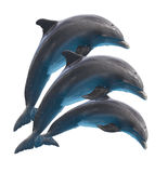 在白色的跳跃的海豚 免版税库存照片