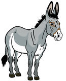 在白色的驴 免版税库存图片
