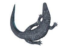 在白色的鳄鱼凯门鳄 皇族释放例证
