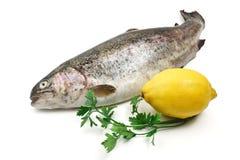 在白色的鳟鱼 免版税图库摄影
