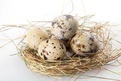 在白色的鹌鹑蛋 免版税图库摄影