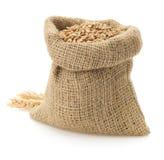 在白色的麦子五谷 免版税库存图片