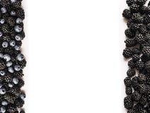 在白色的黑和蓝色莓果 顶视图 成熟黑莓和蓝莓在白色背景 在图象机智边界的莓果  免版税库存图片