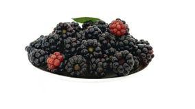在白色的黑莓 免版税库存照片
