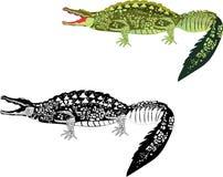 在白色的2条鳄鱼 免版税库存照片