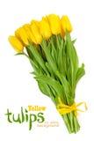 在白色的黄色郁金香 库存图片