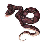 在白色的水蟒蛇 皇族释放例证
