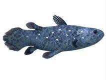 在白色的Coelacanth鱼 免版税库存照片