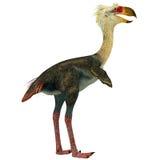 在白色的Phorusrhacos鸟 库存照片