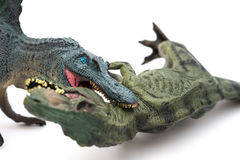 在白色的Spinosaurus尖酸的暴龙 库存照片