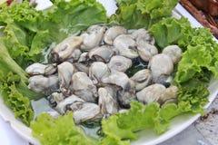 在白色盘的新鲜的牡蛎 库存图片