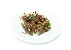 在白色盘的油煎的昆虫 免版税库存图片