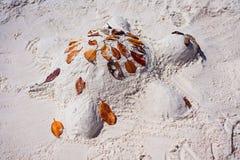 在白色硅土沙子海滩的乌龟沙堡在Whitsundays澳大利亚 免版税库存图片