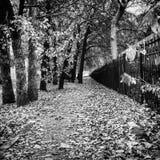 在白色秋天道路的黑色 库存图片
