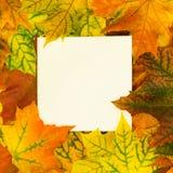 在白色空白附近的秋天五颜六色的叶子您的文本的 顶视图和拷贝空间 免版税库存照片
